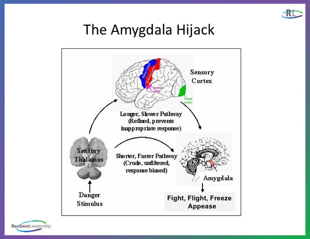 The Amygdala Hijack